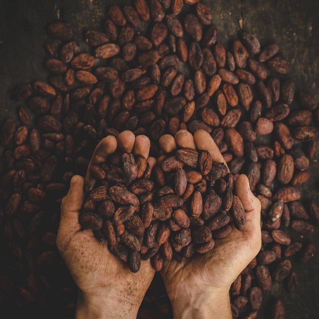 Wholesale Organic Dry Lima Beans ready from Pataya