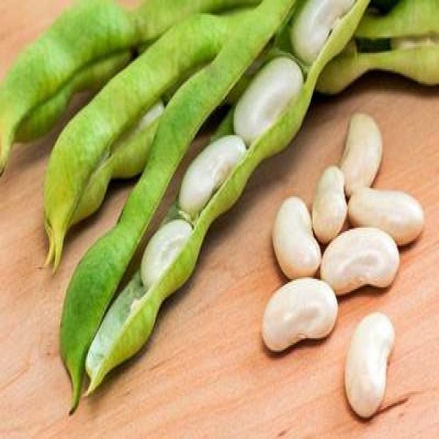 Fresh Dried Frozen Lima Beans,White Lima Bean
