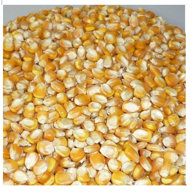PREMIUM Quality Non GMO Dried White Corn/ Dried Yellow Corn/ Maize from UKRAINE