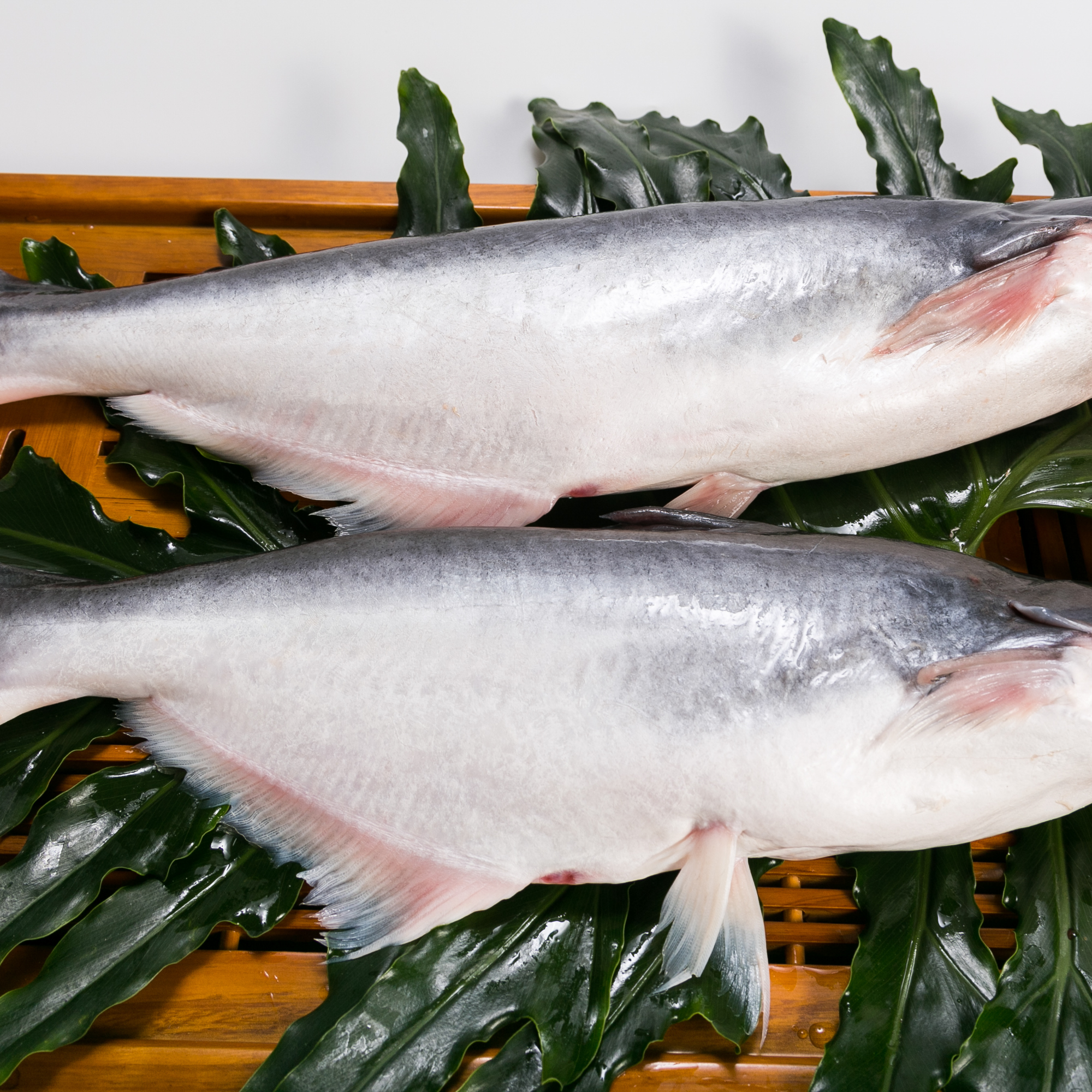 10kg Whole Round Pangasius Fish With Shelf Life 24 Months made From Mekong Delta Vietnam