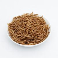 Freeze dried meal-worms 2019 ready for shipment low price