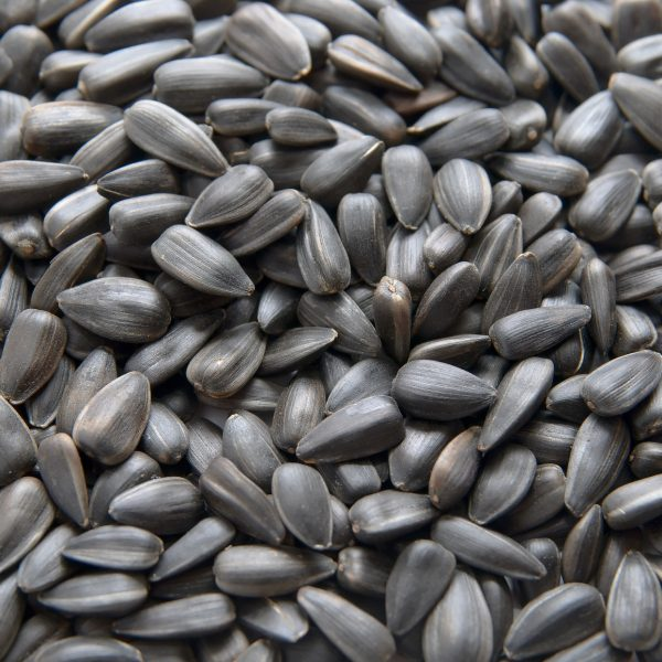 best quality sunflower seeds for sale