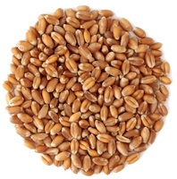 Wholesale Best Price Russian Grain Feed Wheat