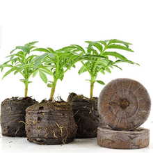 Coir Jiffy plugs/High Quality Coir pellets price/ Indoor Garden Peat Pellets Coco Coir Grow Pellet