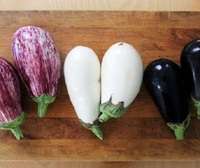 High quality vegetables importer fresh eggplant good seller