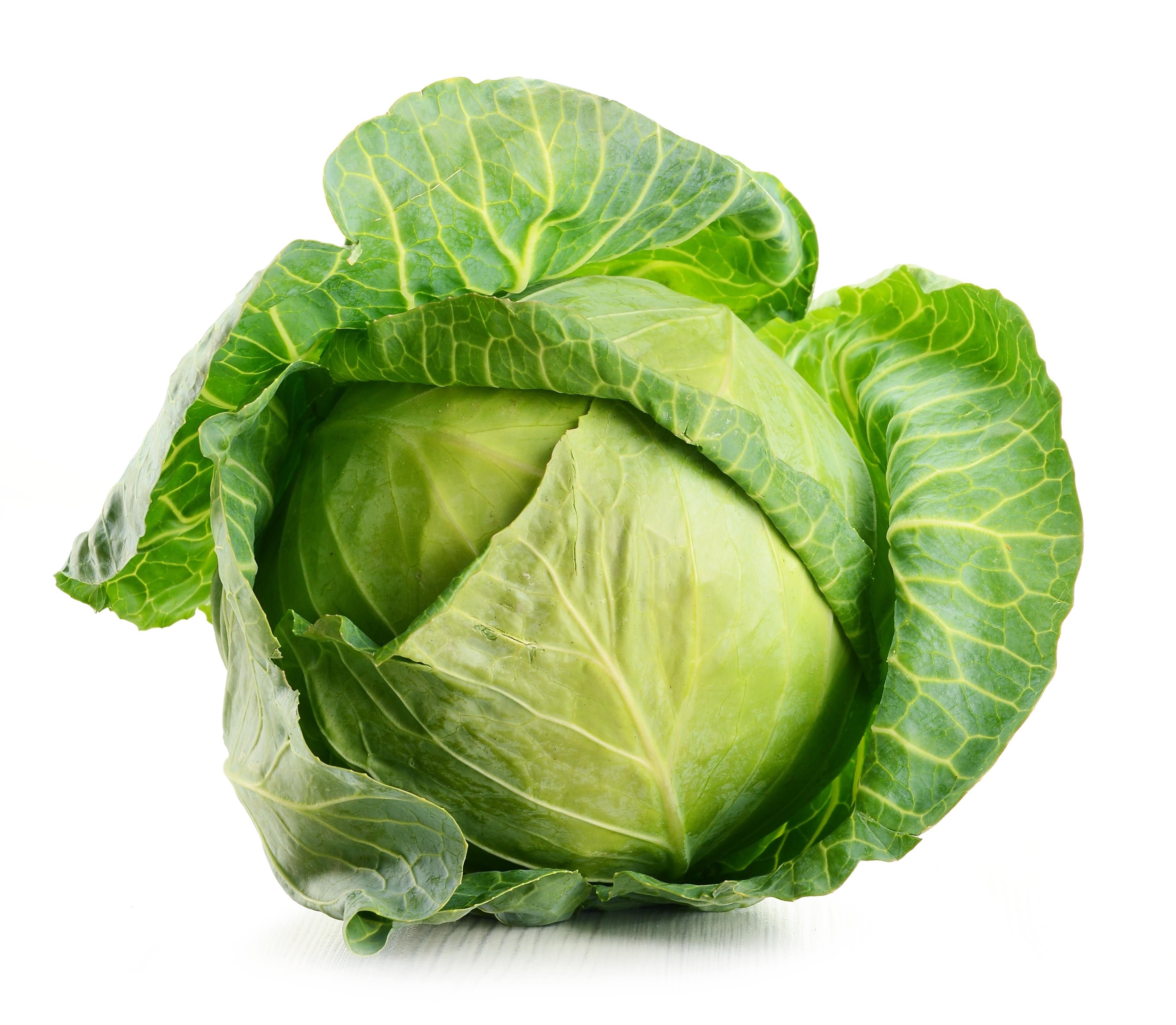 фото картинки рисунки капусты