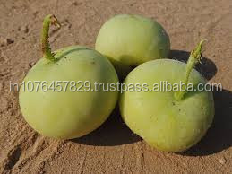 HIGH YIELD TINDA SEEDS VERITY