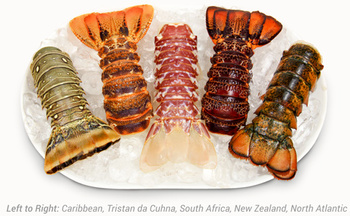 Canadian Frozen/live Lobster Available For Urgent Delivery - Buy Lobster,Canadian Lobster ...