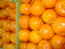 fresh egyptian mandarin exporting high quality A