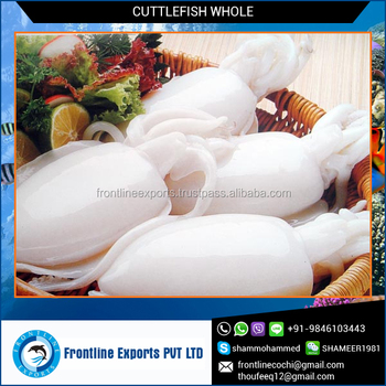 High Quality Whole Cuttle Fish As Per Requirements Size