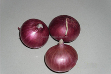 2017 New Crop Red Onion/ Bellary Onion from India