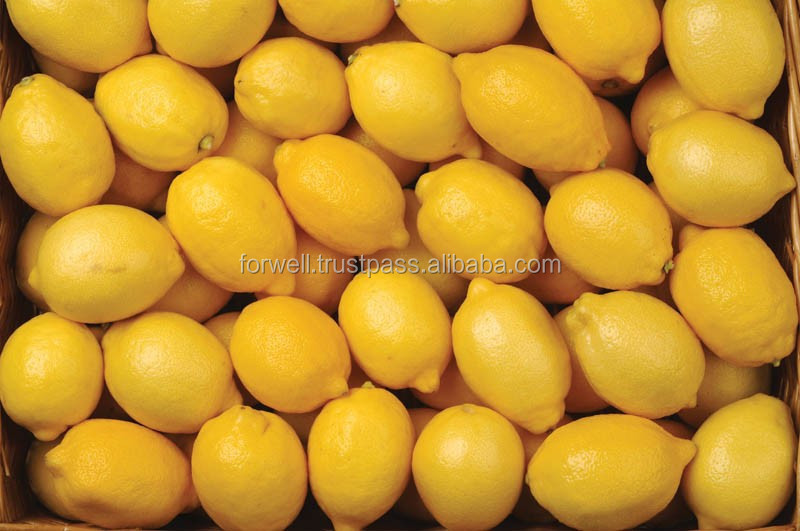ration price best fresh lemon in egypt