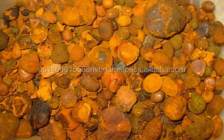 cattle gallstone bezoar