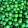 High quality fresh seedless lime