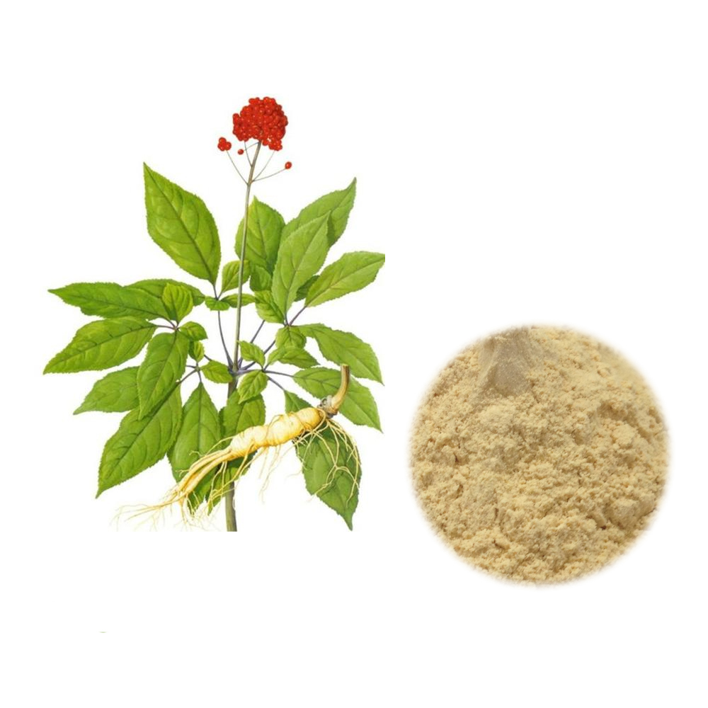 High Quality Natural American Ginseng Extract Powder