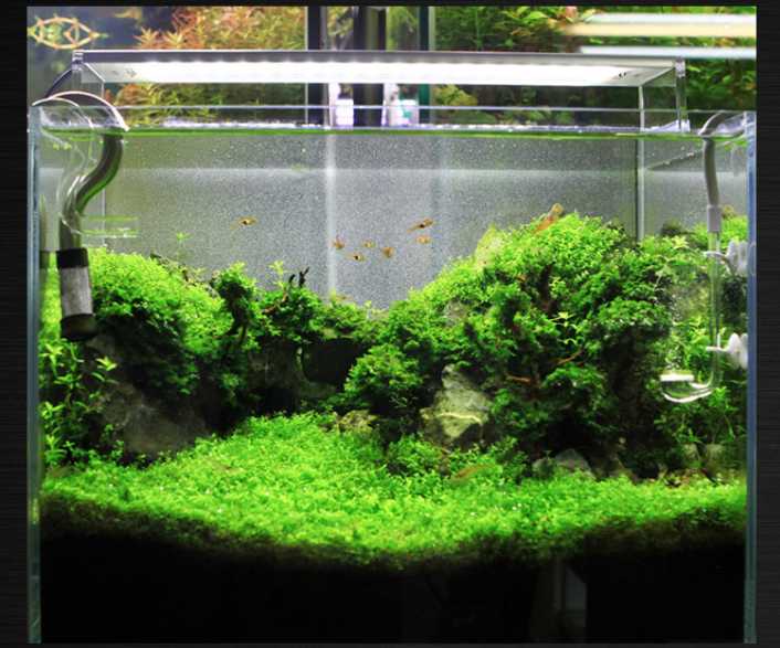 Distributors Wanted Chihiros Aquarium A-series Lighting Led System ...