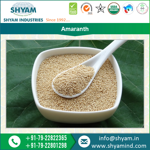 Best Amaranth Seeds for Sale at Affordable Rates