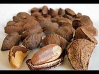 Brazil nuts, Organic Brazil nuts ( Raw & Shell )