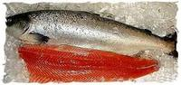 Fresh Norwegian salmon fish/Frozen Norwegian salmon fish