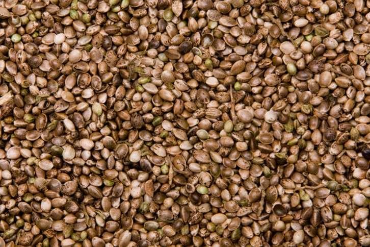 Hemp Seeds For Bird Feeds