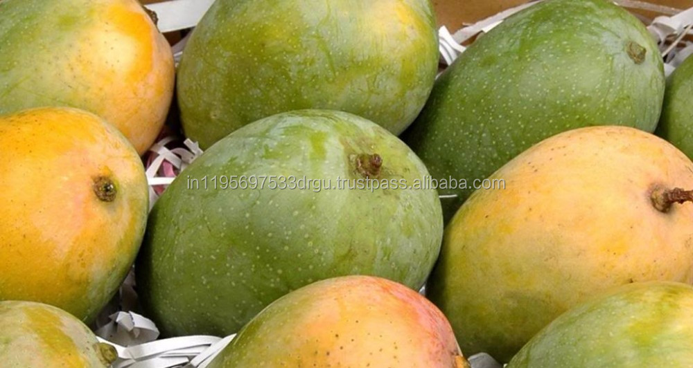 Yellow / kesar mango / Indian Gir / green