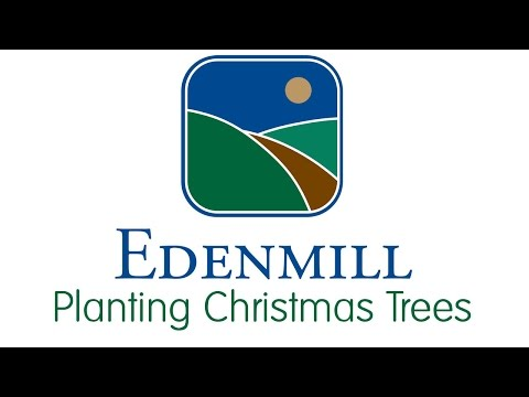 Edenmill Christmas Trees - 'Planting Christmas Trees'