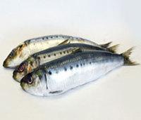 new wholesale seafood price of fresh frozen bulk sardine fish