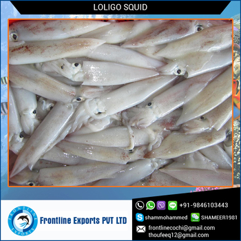 Best Quality Fresh Frozen Whole Round Loligo Squid for Sale