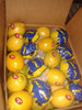 super Citrus Fruit Product Type and Fresh Style Fresh Egyption lemons for sale