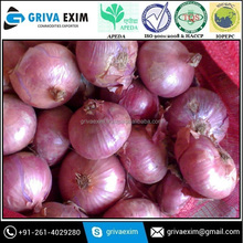 High Quality Fresh Red Onion IN Lowest Price