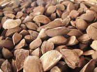 Premium quality Organic Brazil Nuts