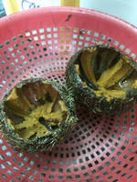 FRESH/FROZEN SEA URCHIN HIGH QUALITY FROM WALA SEAFOOD SUPPLIER