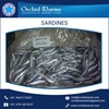 Long Shelf Life Frozen Whole Sardine Fish Exporter