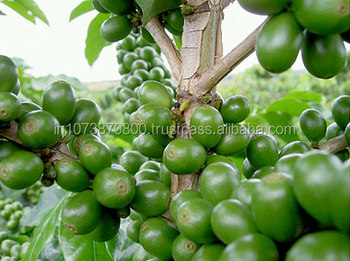 Gg-garcinia-cambogia-and-green-coffee-bean-supplements image 9