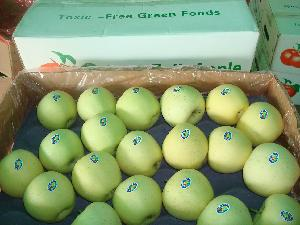 Fresh Exporting Standard Golden Apple