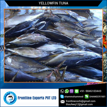 100% Fresh H&G Yellowfin Tuna at Best Price