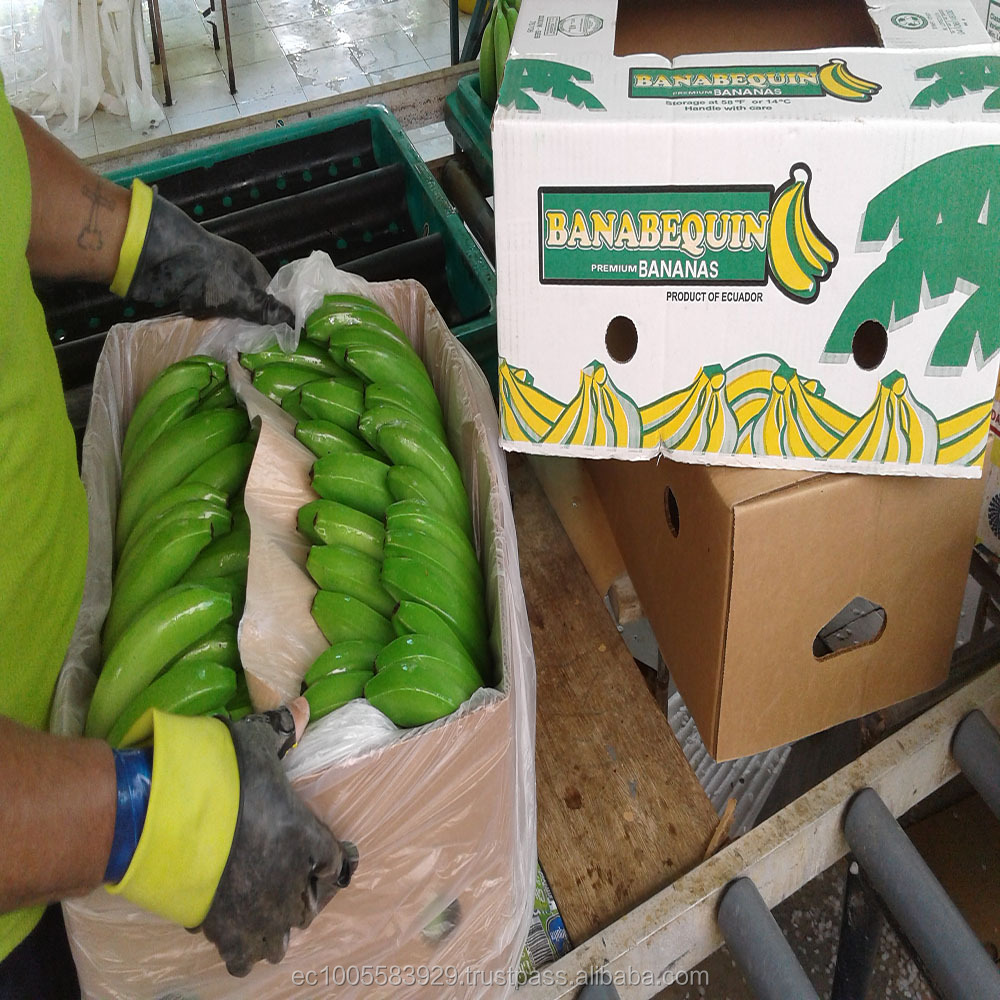Fresh Bananas from Ecuador