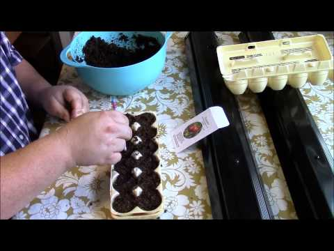 Homesteading: Starting Seeds Indoors With Egg Cartons