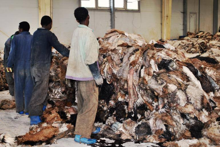 We sell wet and Dry Donkey hides , COW SKIN, SHEEP SKIN for sale