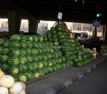 FRESH SWEET WATERMELON FOR EXPORT