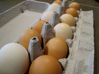 Halal Fresh White Eggs,Table Eggs,Poultry Eggs,Chicken
