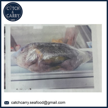 Blotched Snapper Frozen Fish Buy Fish Frozen Fish Red