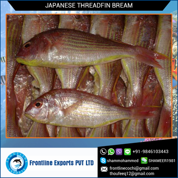 Certified Quality Japanese Threadfin Bream from India