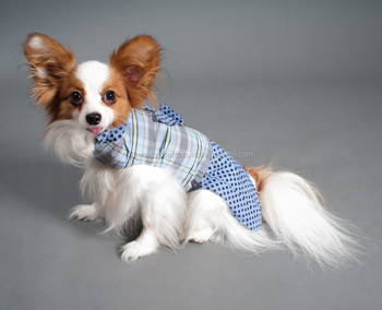 New Fashionable Design Soft High Quality Jacket for Pet Dog Apparel