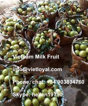 Star Apple Milk Fruit
