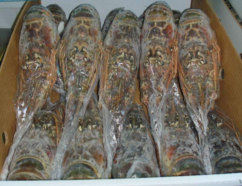 Image result for Frozen Lobster