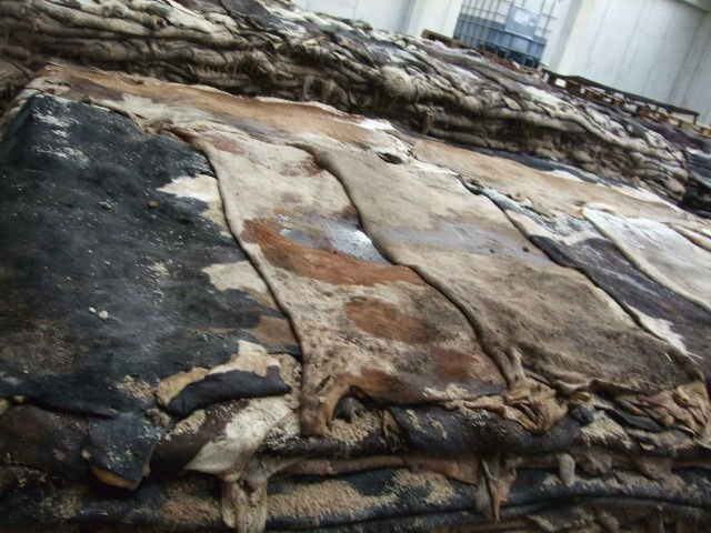 Animal Dry and Wet Salted Skins/ Cow Skin/Goat Skin/ Salted Cow Hides