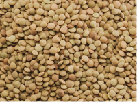 Green Lentils HPS Quality Dry Green / Red Lentils CANADA