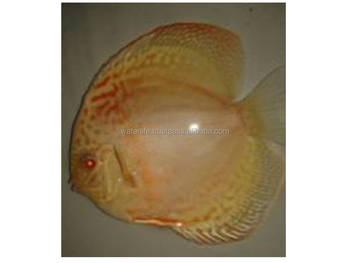 Unduh 610 Gambar Ikan Hidup Terpopuler