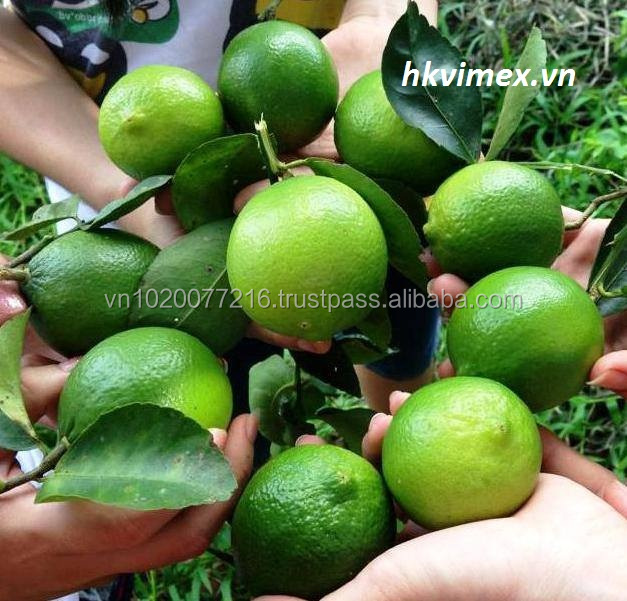 quality products:super products lemon and fresh lime price best vietnam